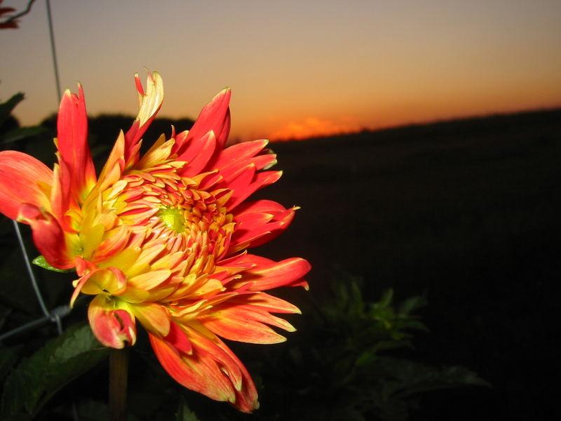 Flower and Sun....