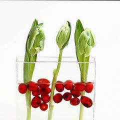 Flower arangement 355