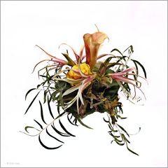 Flower arrangement 4854