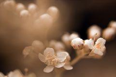 Flower Art of Nature I