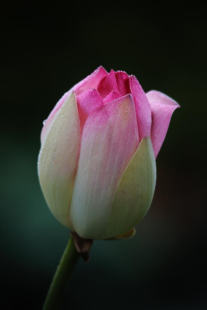 ...flower...