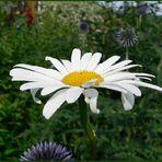 <flower>