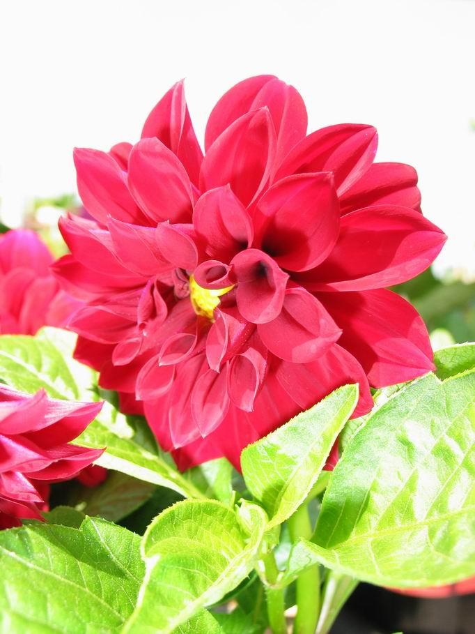 Flower Color Nature 2