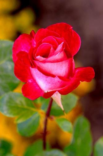 Flower Color Nature5