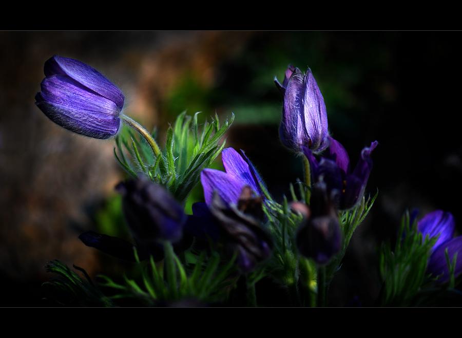 Flower-Dream