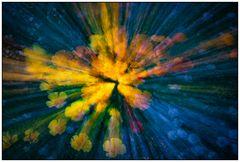 Flower Explosion #1
