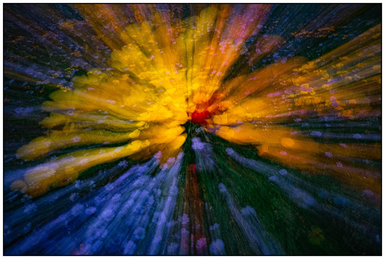 Flower Explosion #2