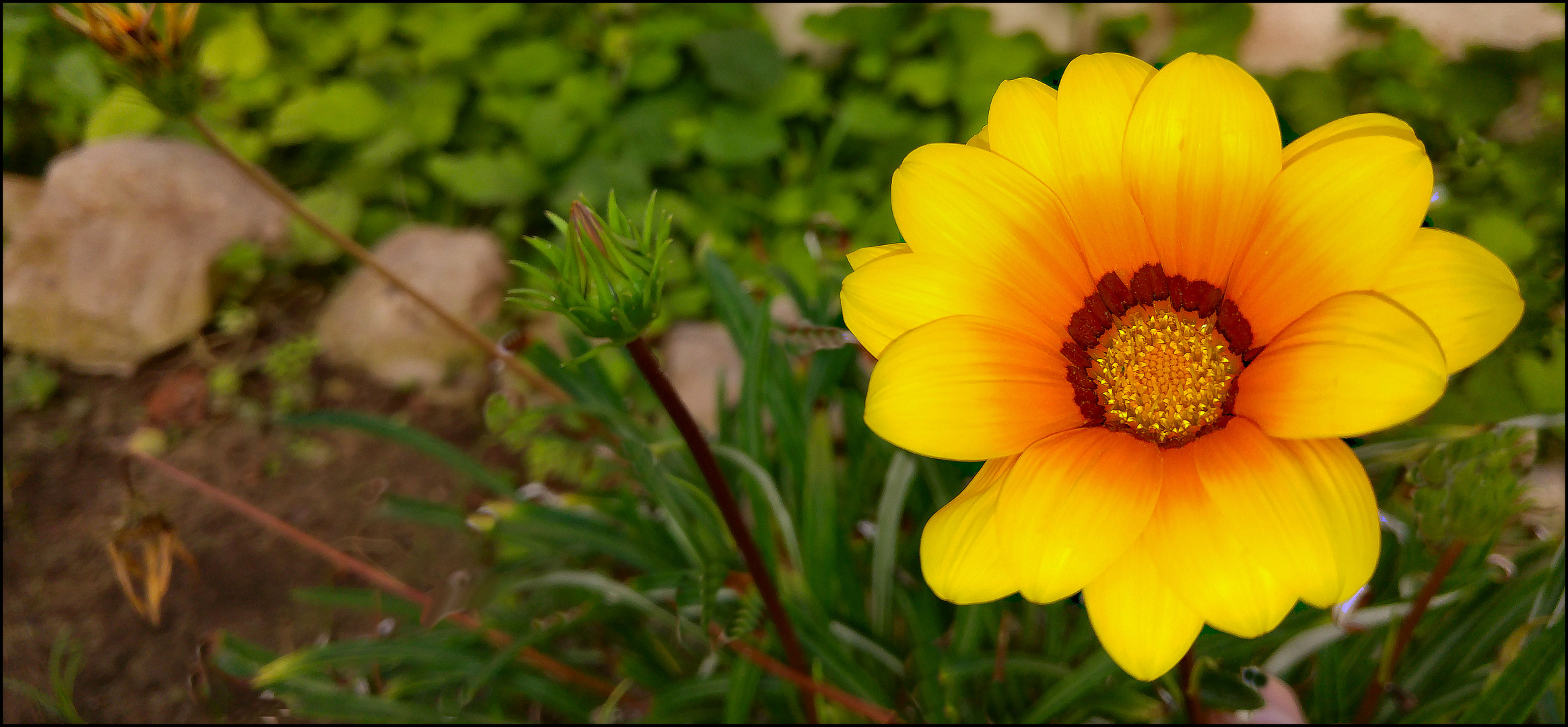 Flower for friends