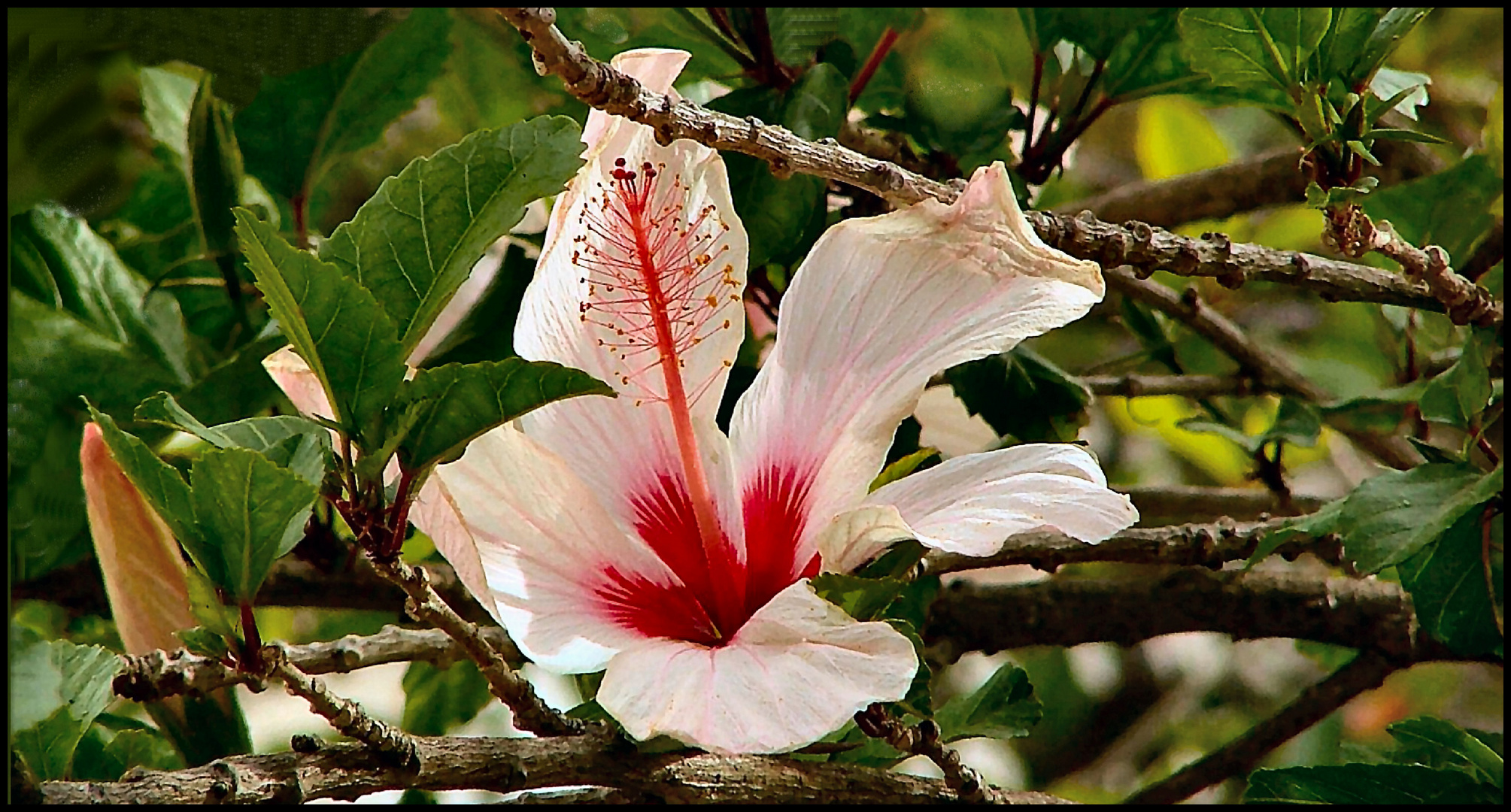 Flower for my  friends