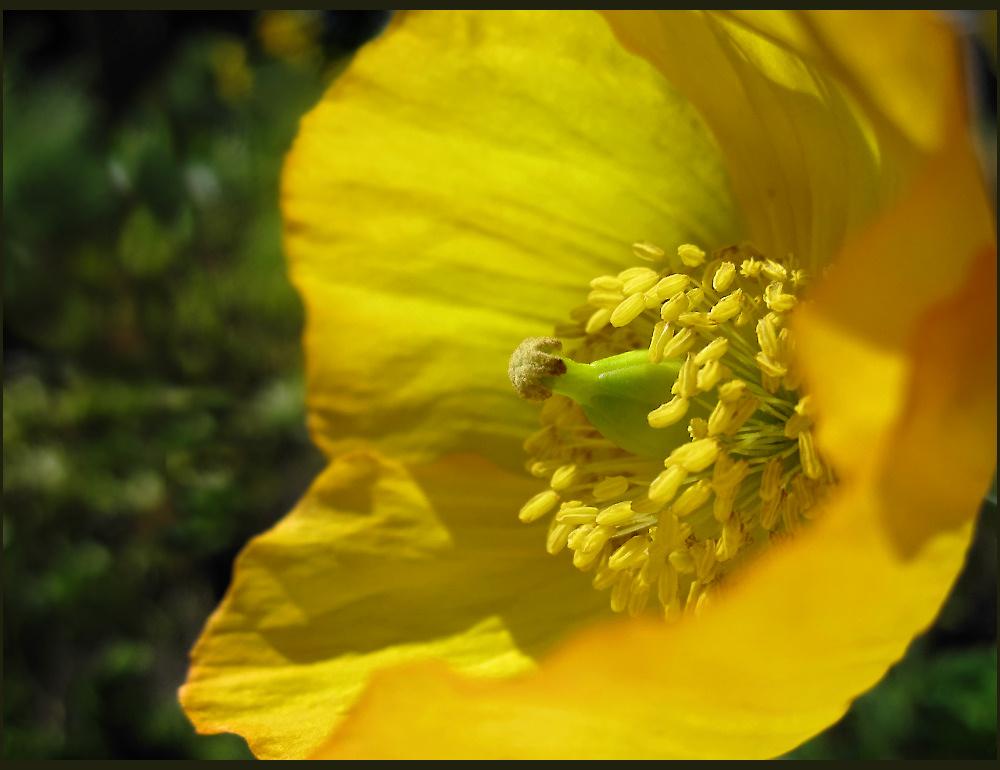 Flower from last summer