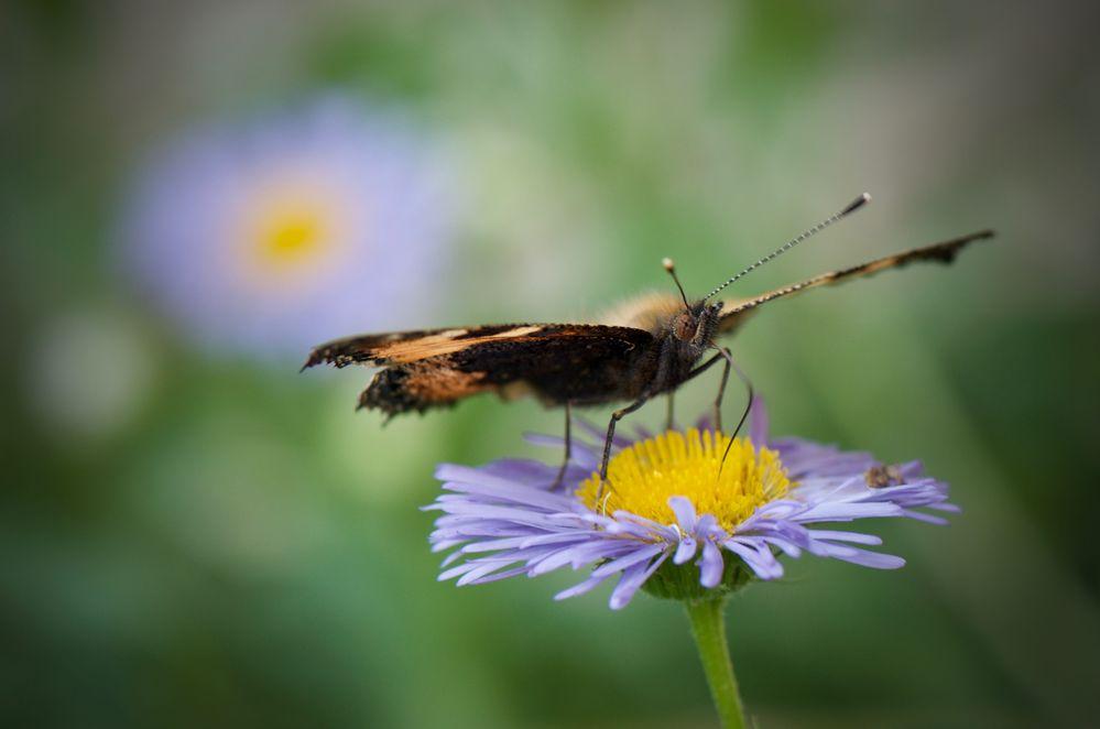 - flower hopping  -