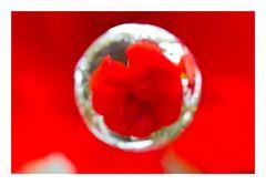 Flower in Cercle[10]