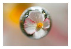 Flower in Cercle[11]