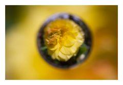 Flower in Cercle[12]