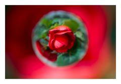 Flower in Cercle[14]