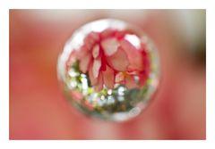 Flower in Cercle[15]