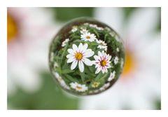 Flower in Cercle[16]