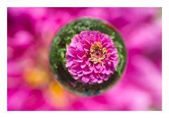 Flower in Cercle[19]