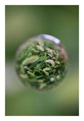 Flower in Cercle[2]
