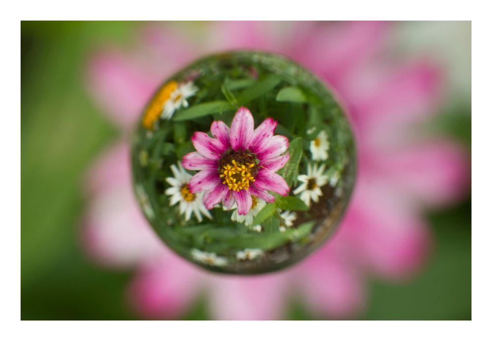 Flower in Cercle[23]