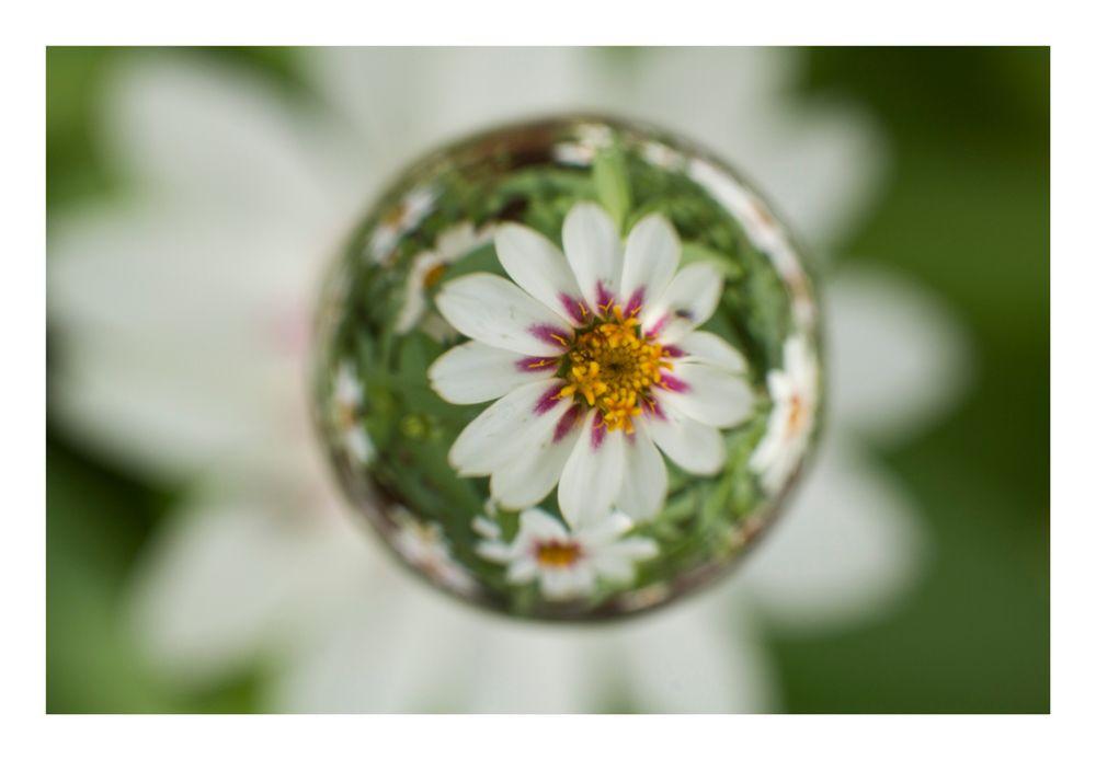 Flower in Cercle[24]