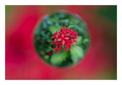 Flower in Cercle[3]