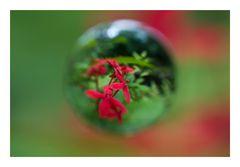 Flower in Cercle[4]