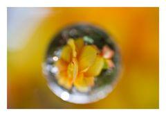 Flower in Cercle[5]
