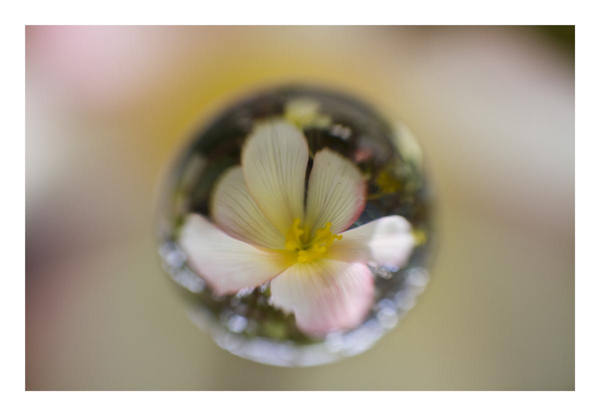 Flower in Cercle[6]