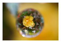 Flower in Cercle[7]