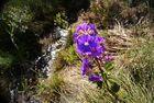 flower in cerrado fields