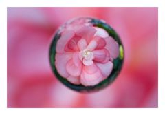 Flower in Circle[17]