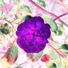 flower in february