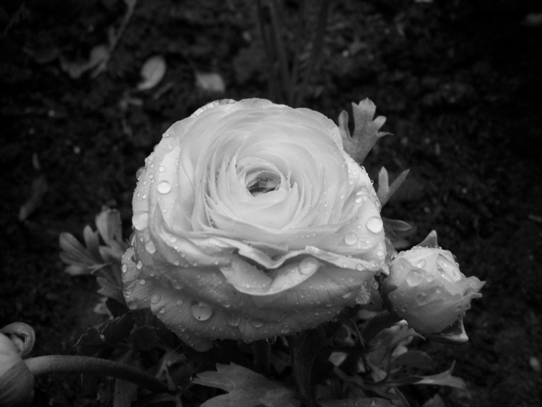Flower in grey........