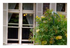 Flower in near the window-2