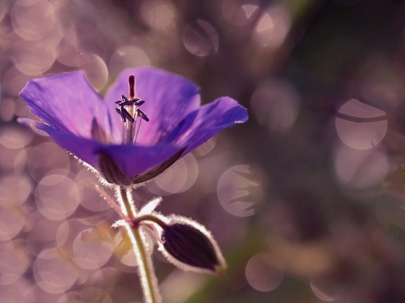 flower in the light