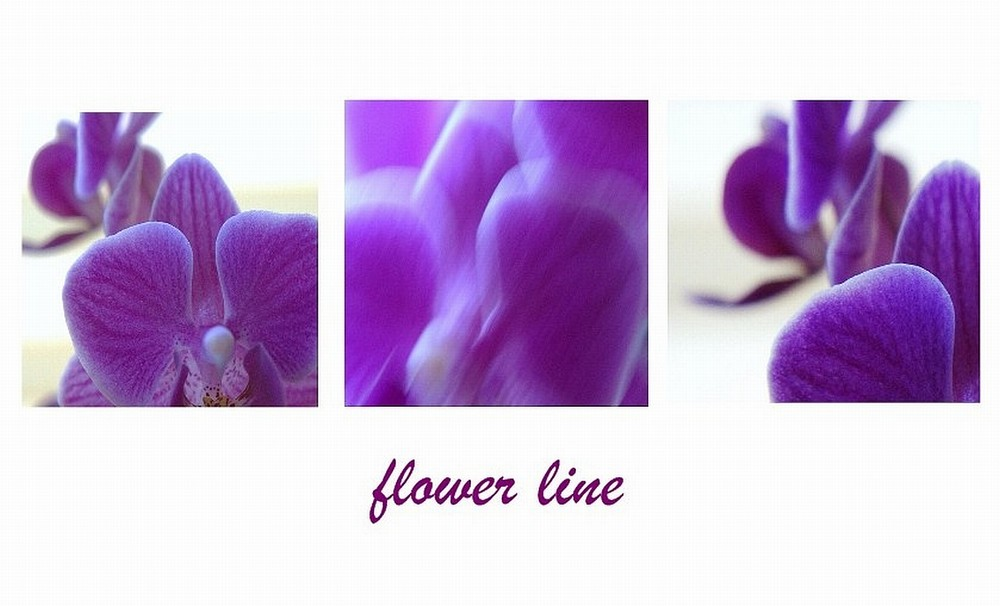 Flower line
