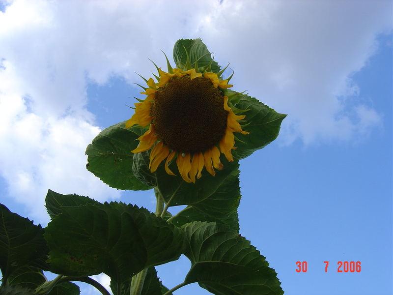 (* Flower moon *)