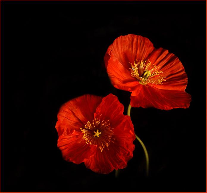 flower of elysium02