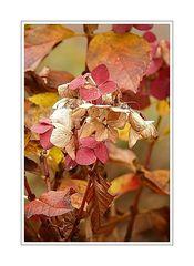 Flower Portrait 06 (Hortensien in it's Herbst).