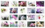 *Flower Power 2010*