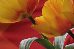 flower power ...