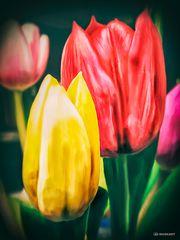 ~ Flower Power ~