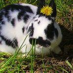 Flower Power :D *Knirps*