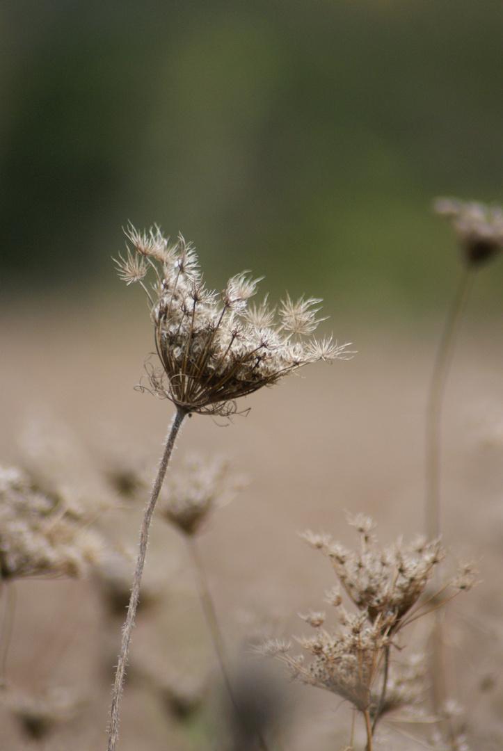 Flower Power in braun
