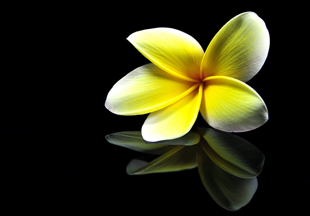 Flower Reflection Photo Image Still Life Subjects Images At