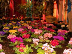 Flower Show Oldenburg Germany