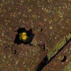 flower vs scrap