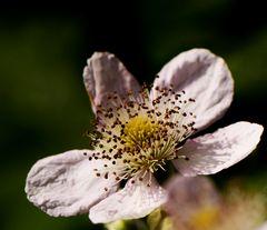 Flower with pistil