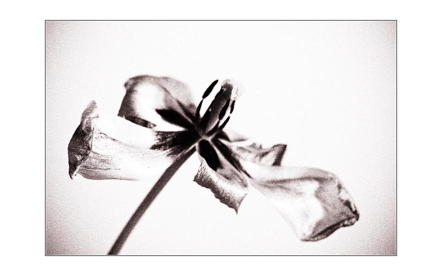 flower_art #15